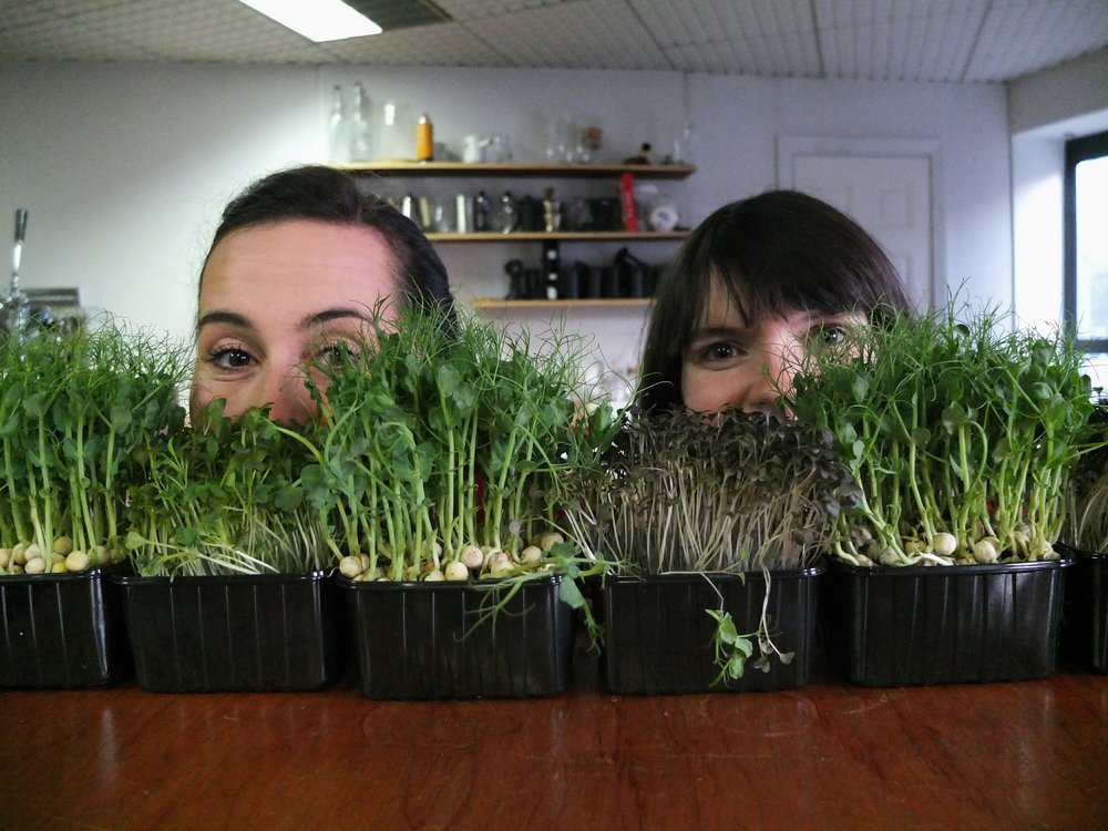 Hilary & Holly in their natural habitat amongst some of our lovely micro cress form Dave Heffernan at Littlecress.