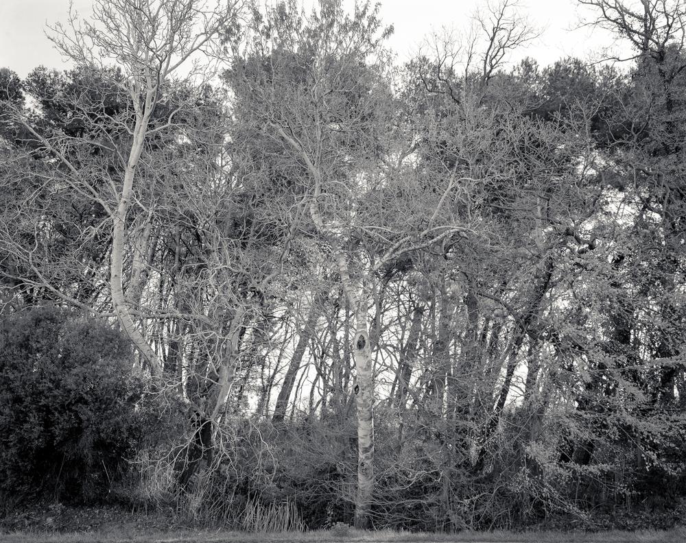 Camargue-9.jpg