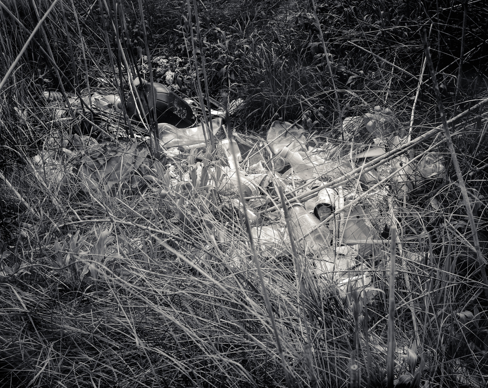 Camargue-46.jpg