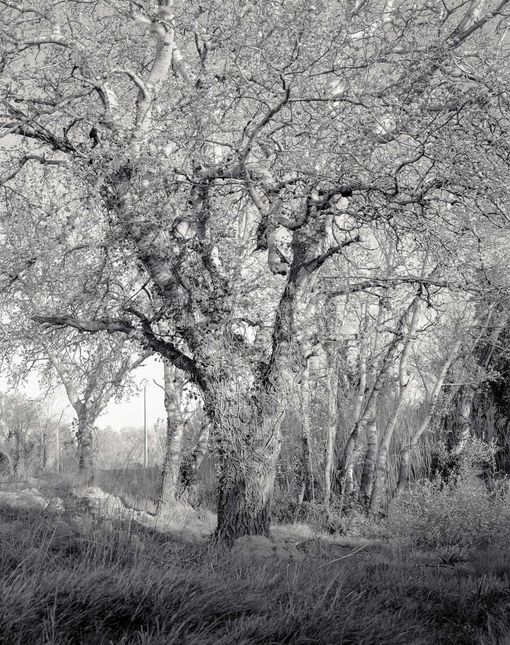 Camargue-70.jpg