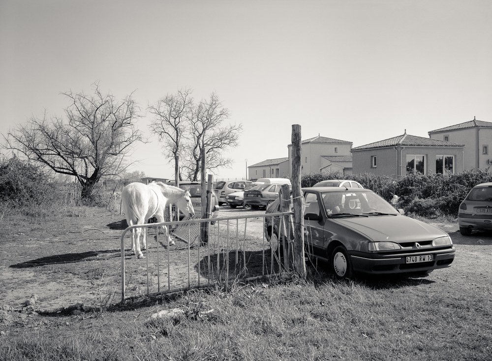 Camargue-84.jpg