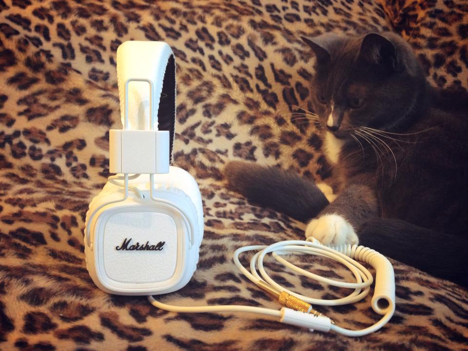 Marshall-headphones-cat-The-Wong-Janice1.jpg