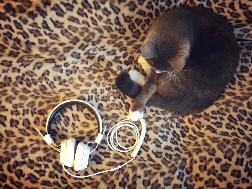 Marshall-headphones-cat-The-Wong-Janice2.jpg