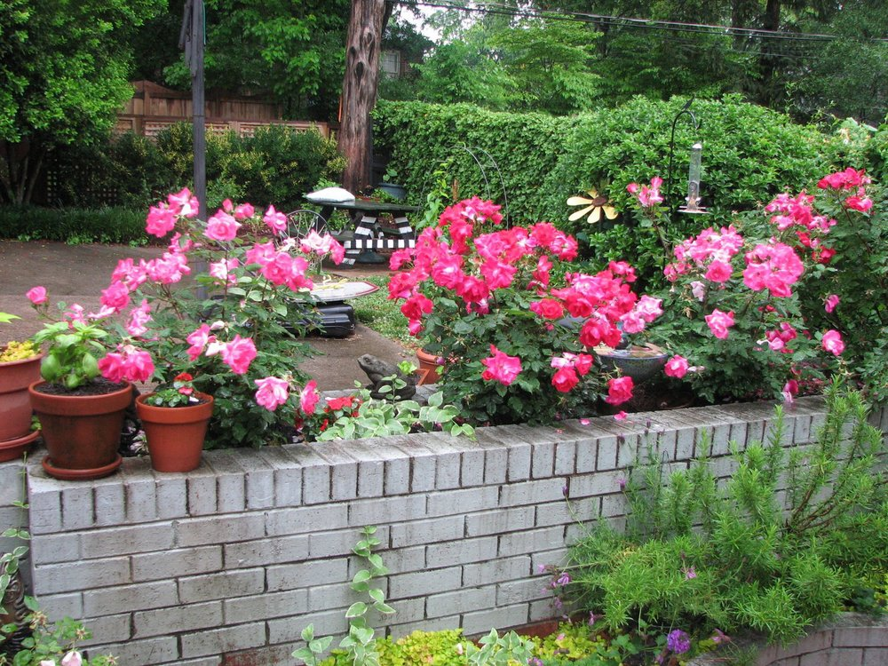 My+Garden+May+09+024.jpg
