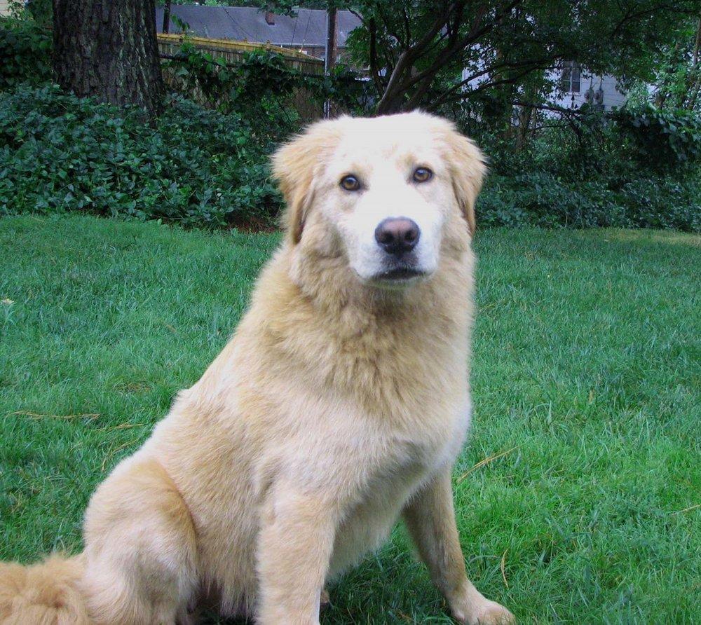 our dog! 006.jpg