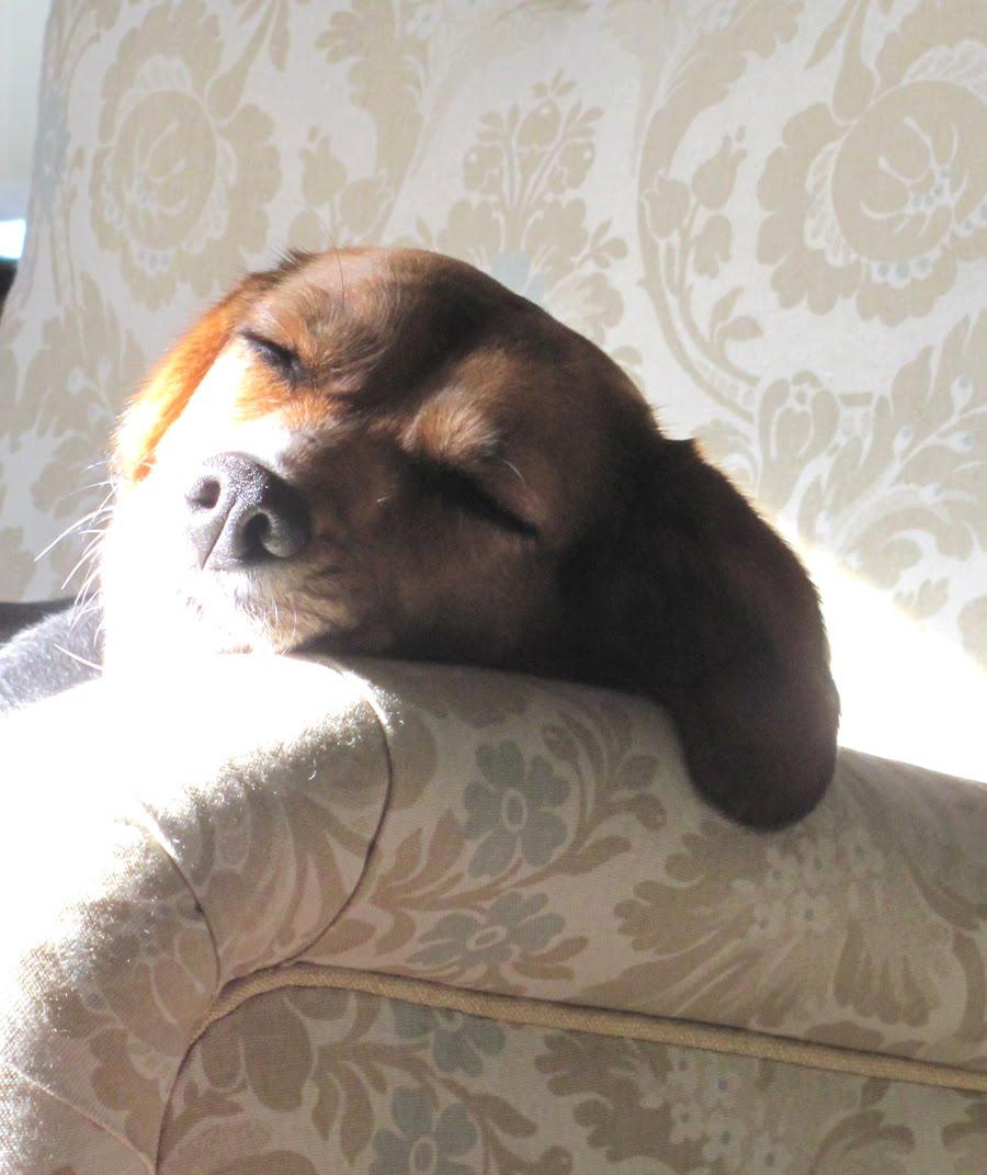 Lily sleeping in the sun 1 copy.jpg