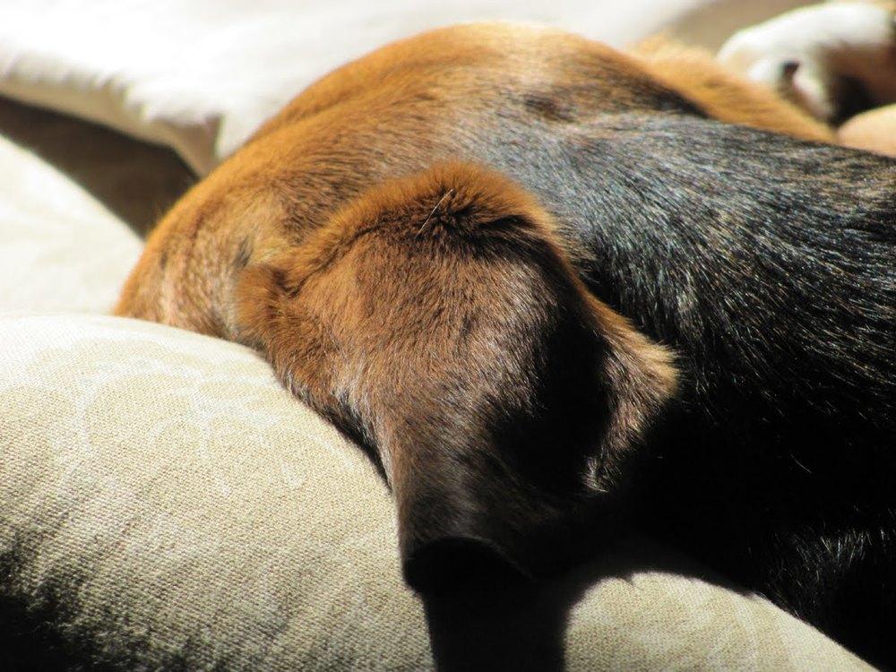 Lily sleeping in the sun 12-11 001.jpg
