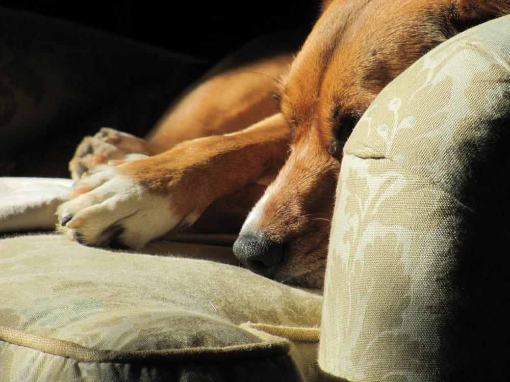 Lily sleeping in the sun 12-11 004.jpg