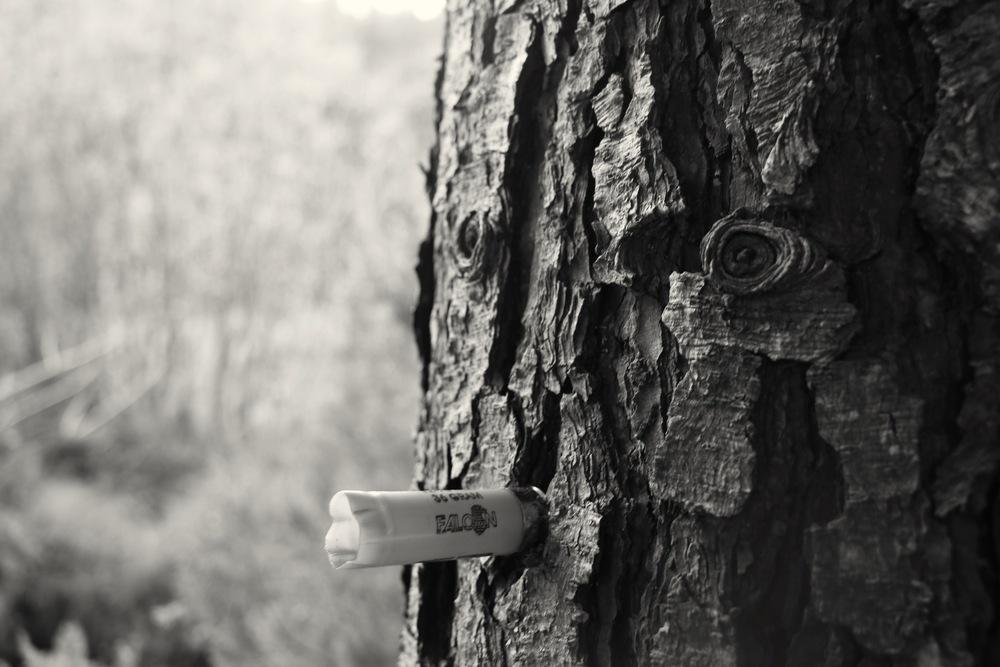 Mr Tree himself
