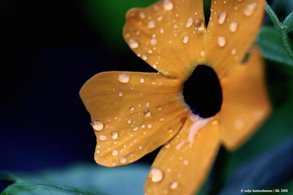 flower, ovalau island, Fiji