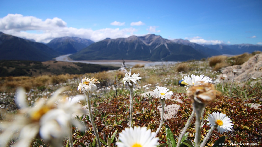 View from Lagoon Saddle onto Arthur's PAss