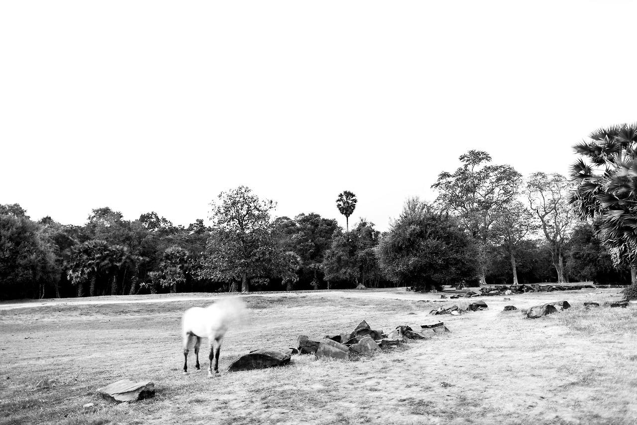 Headless horse, Angkor Wat, Cambodia.