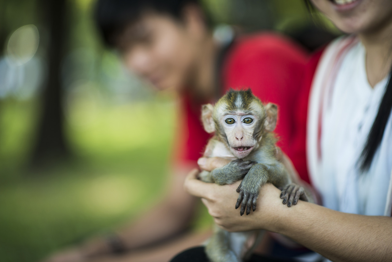 Little monkey, Ho Chi Minh, Vietnam.
