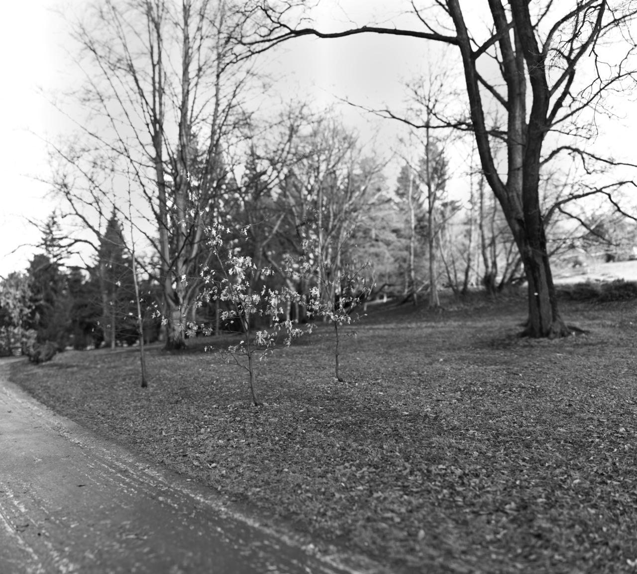 Oslo Botanical Gardens.