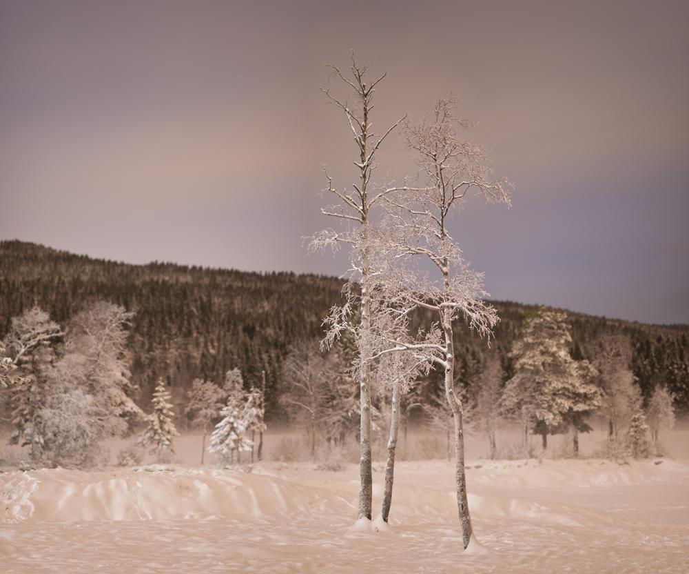Sognsvann, 12/366.