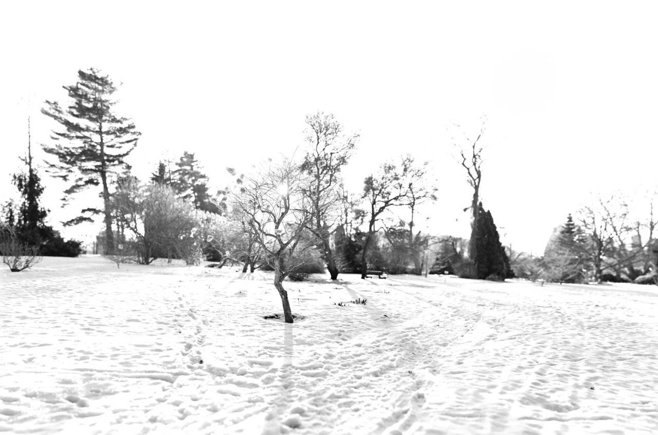 Oslo Botanical Gardens, 17/366.