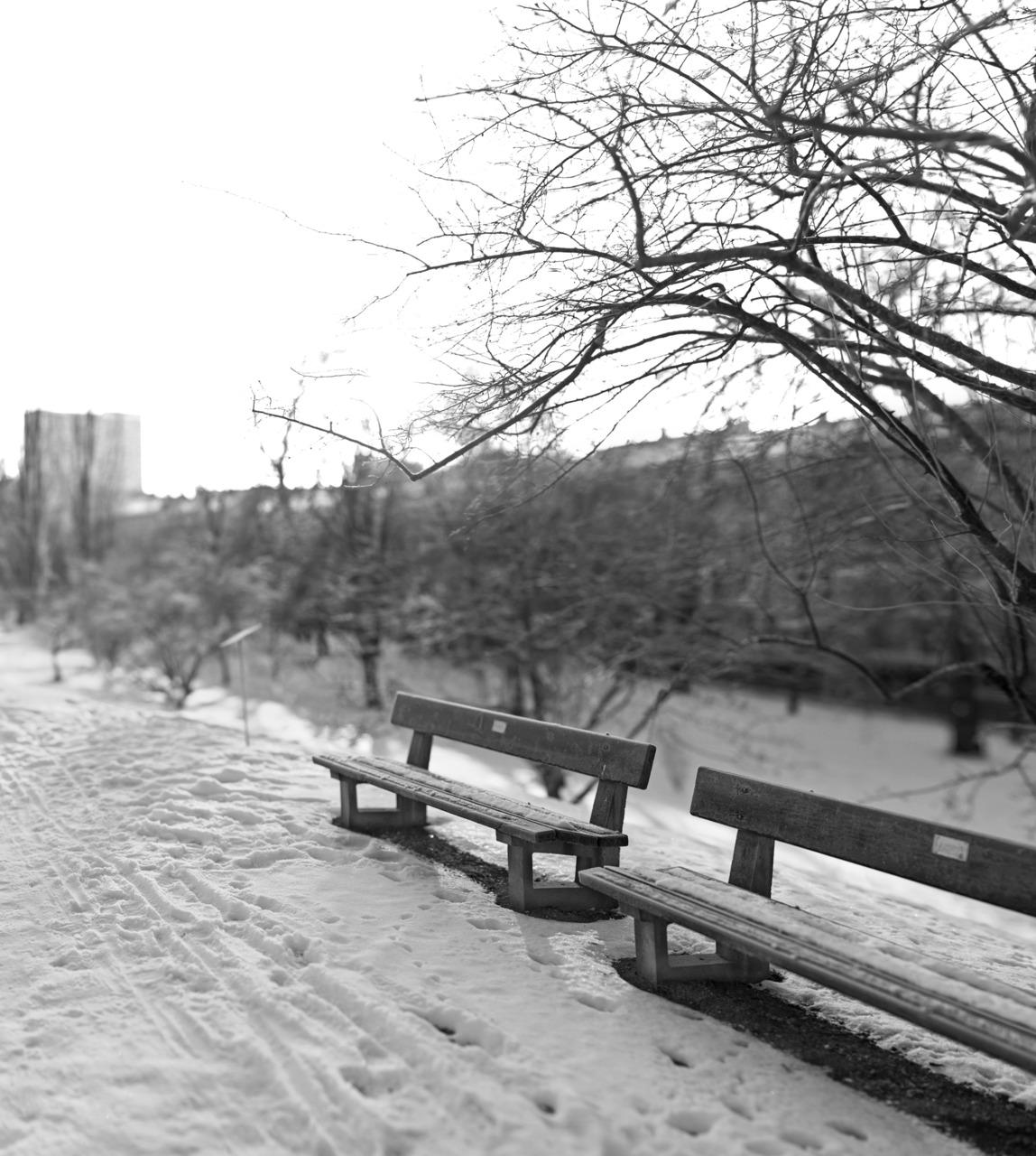 Bench, Oslo Botanical Gardens, 19/366.