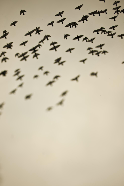 Birds, 29/366.