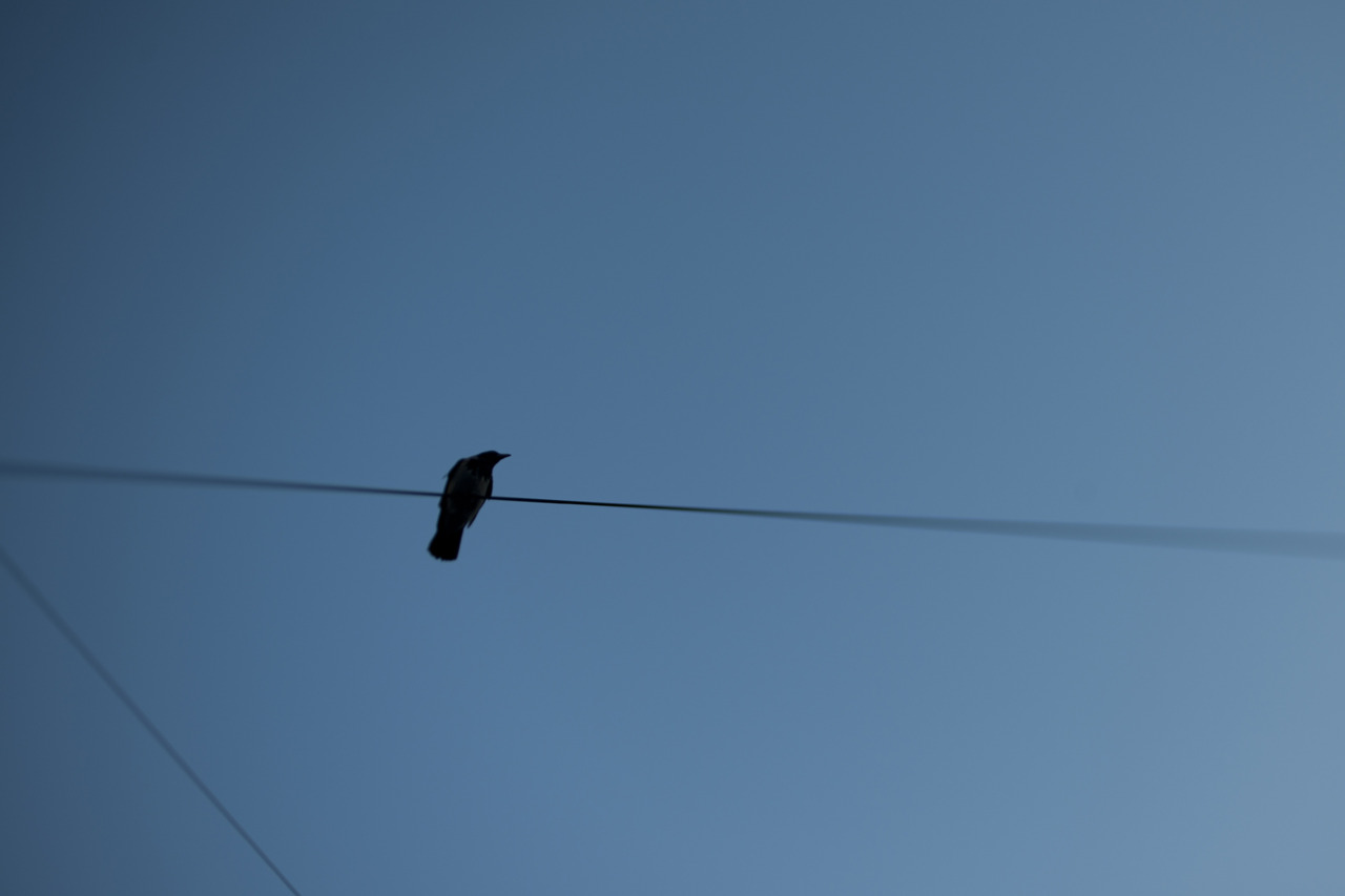 Crow, 31/366.