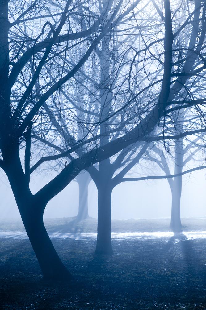 Trees, 61/366.