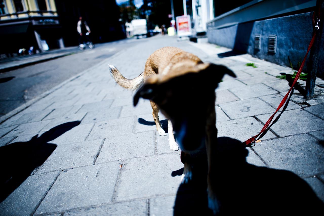 Dog, 174/366.