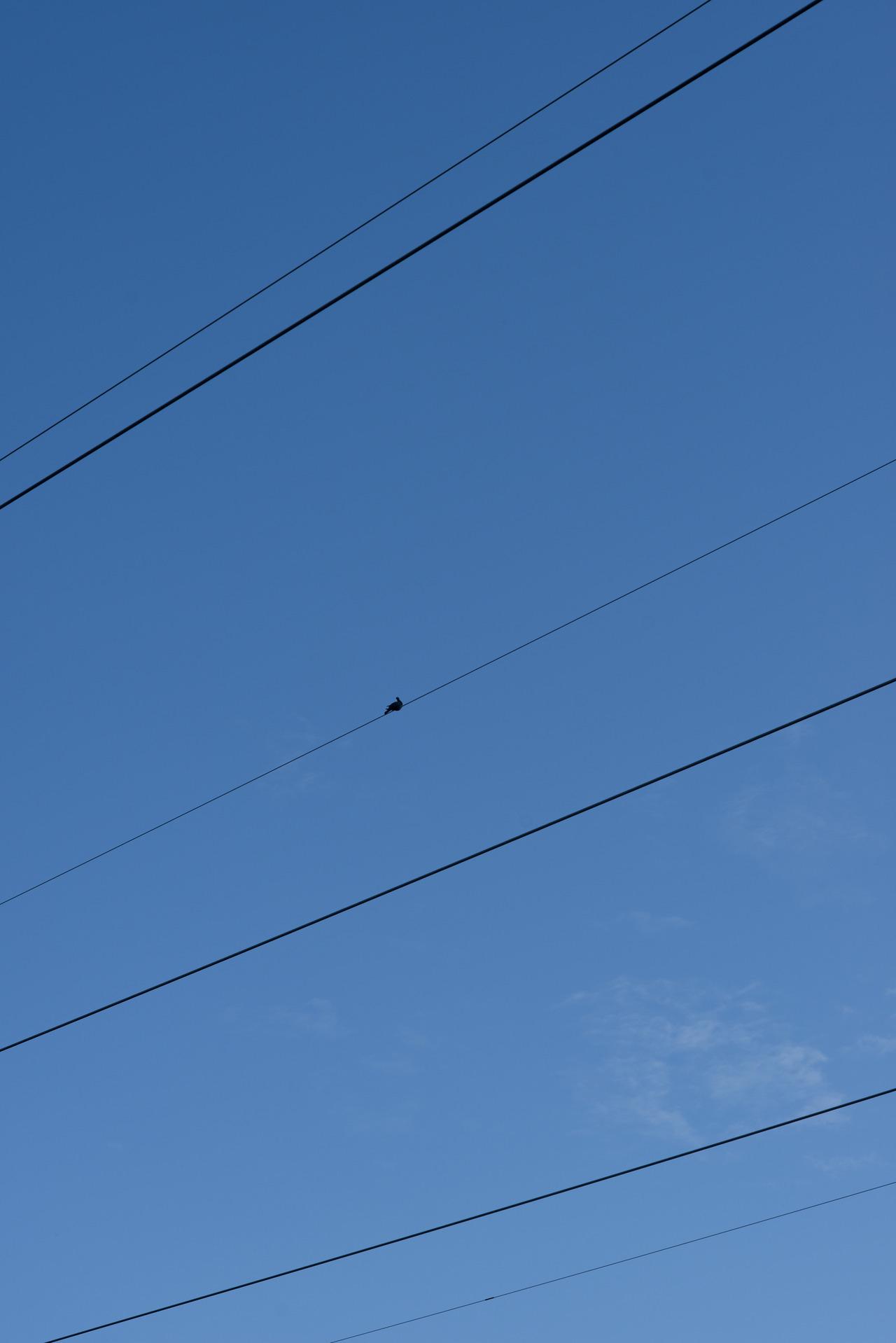 Pigeon, 200/366.