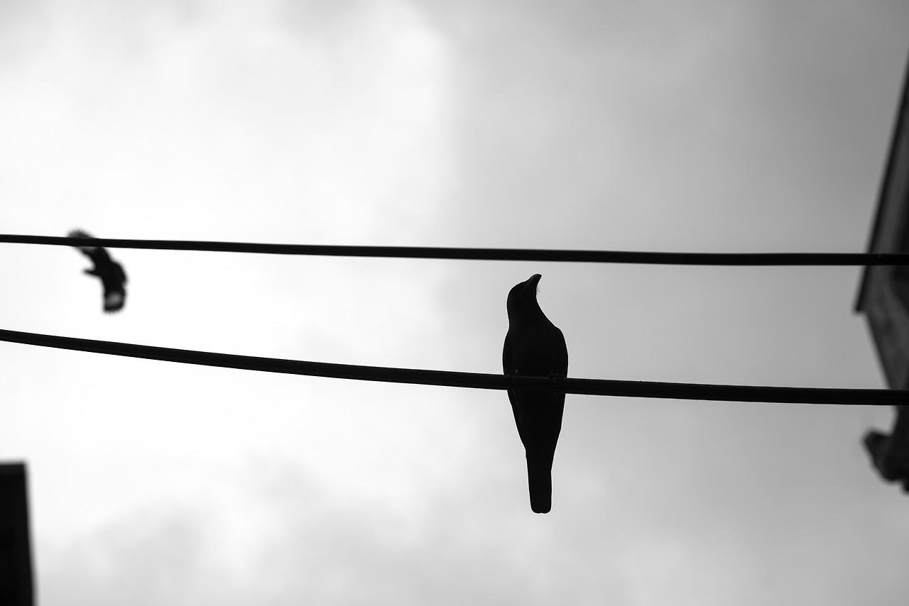 Crows, Kuala Lumpur, Malaysia.
