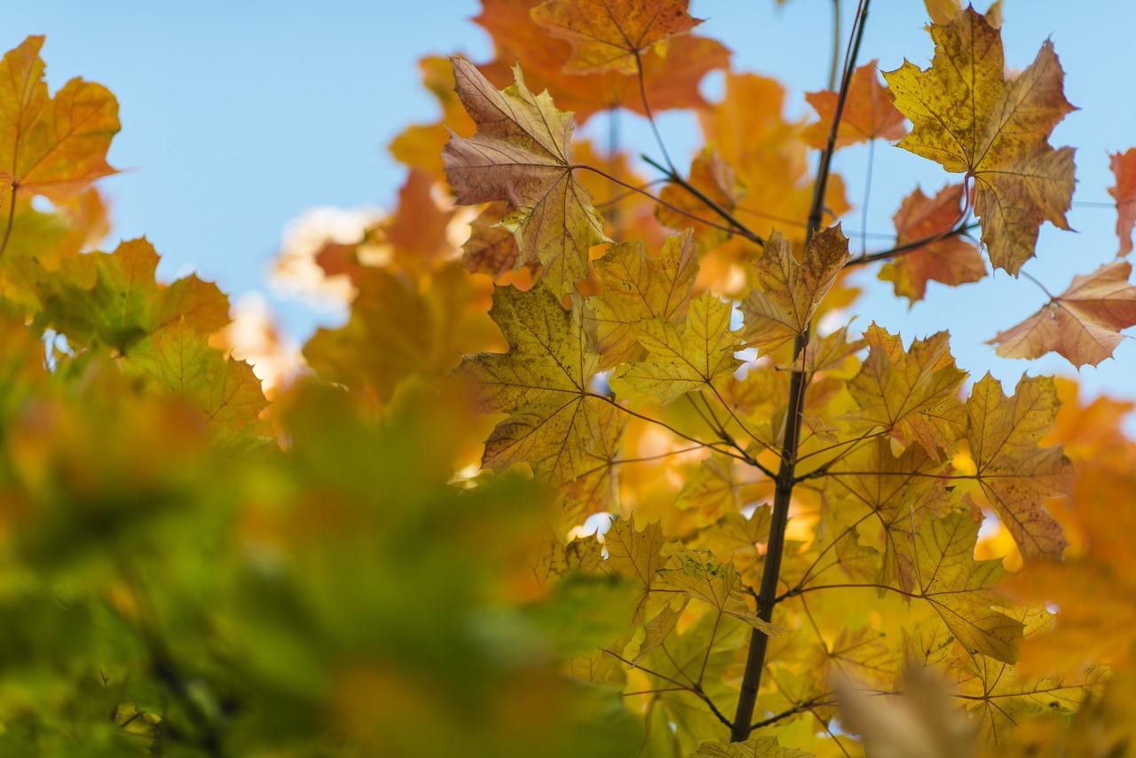 Fall, 272/366.