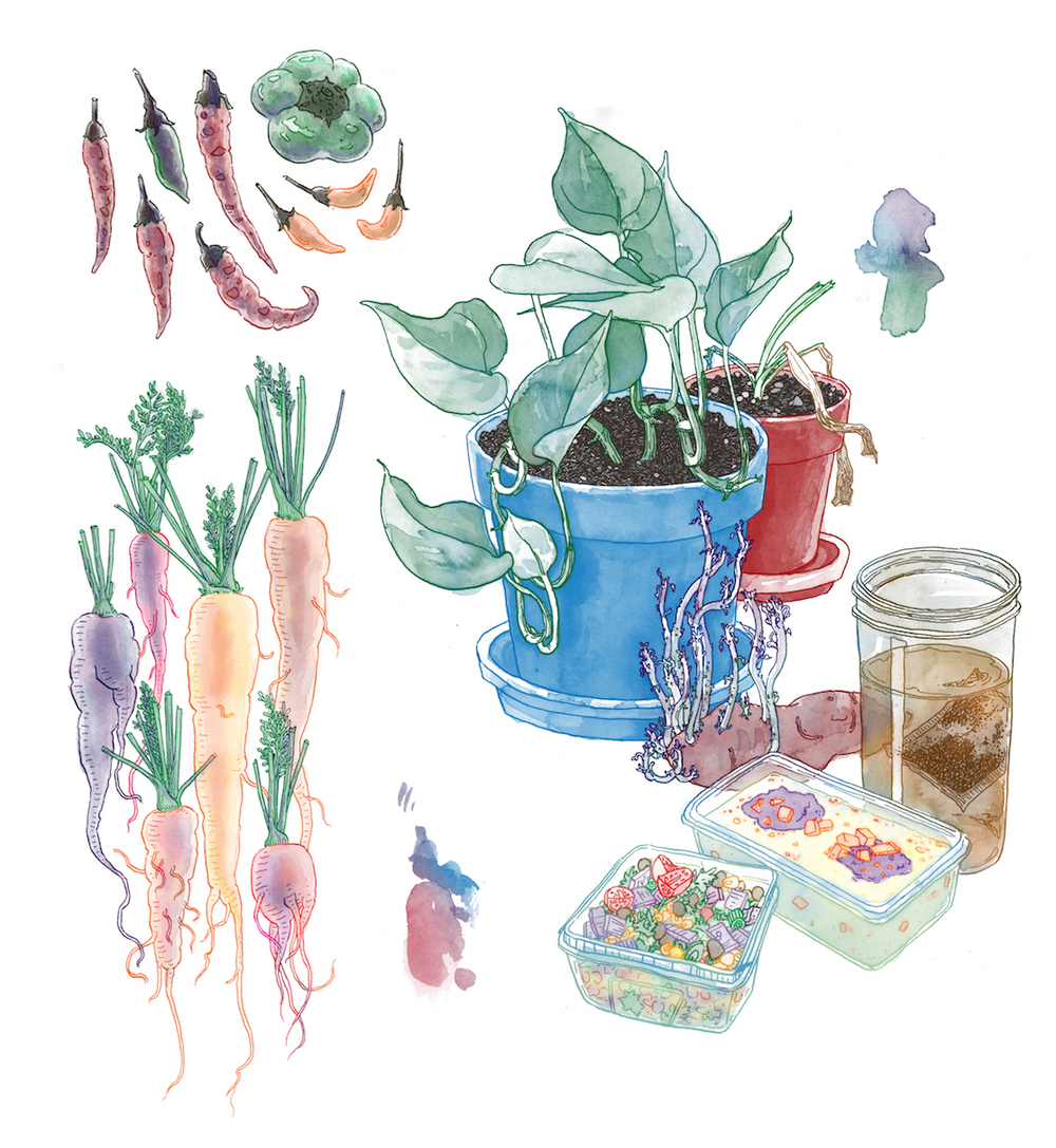 pretty plants and stuff