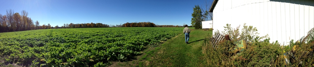 68 acres of radishes, my dad and a barn
