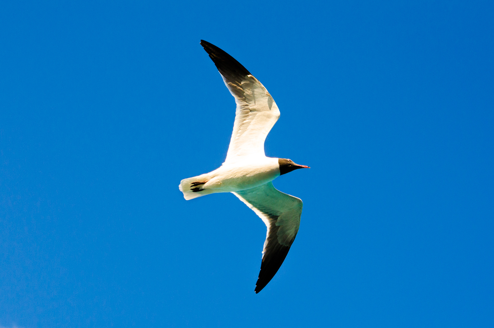 Project 365: #50 - Gliding