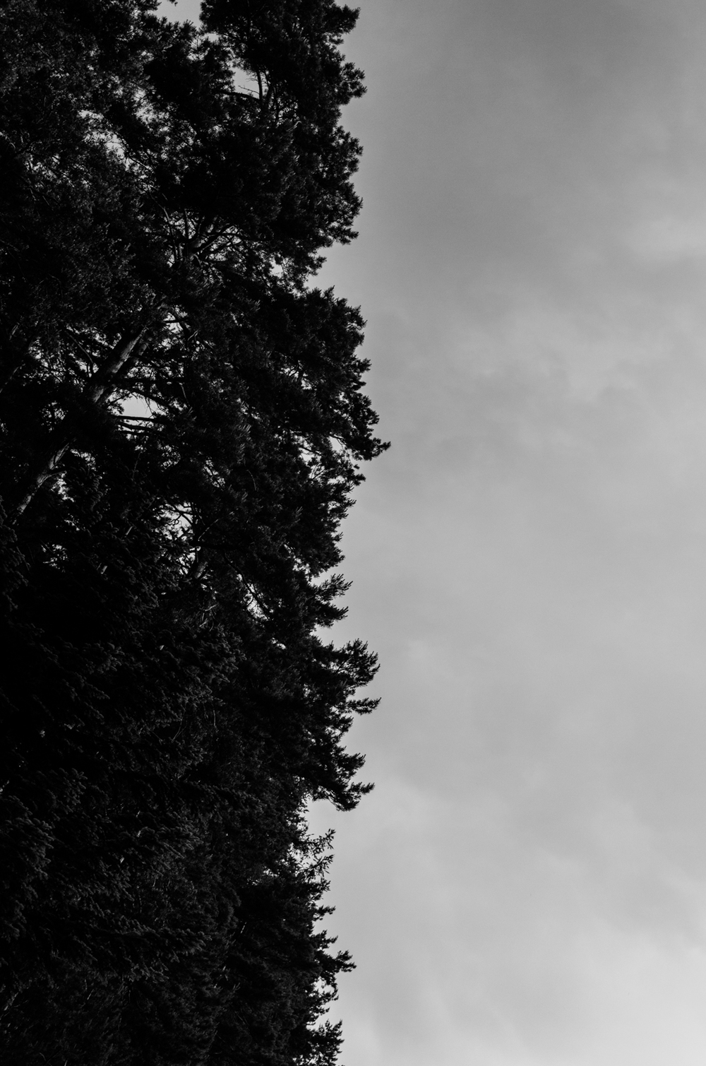 Project 365: #144 - Cloudy Trees