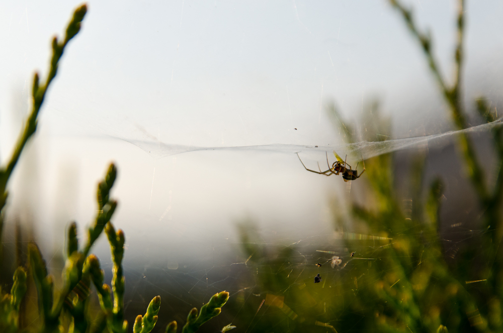 Project 365: #159 - Golden spider