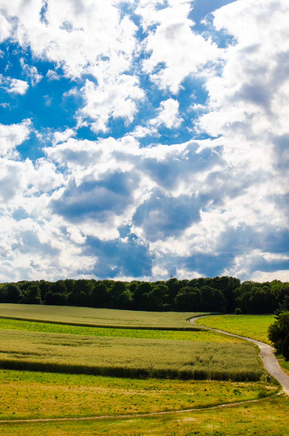 Project 365: #165 - Summer afternoon