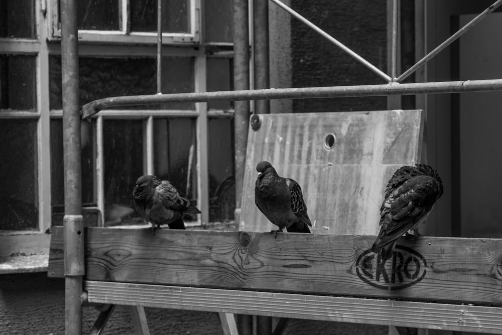 Project 365: #235 - Roosting