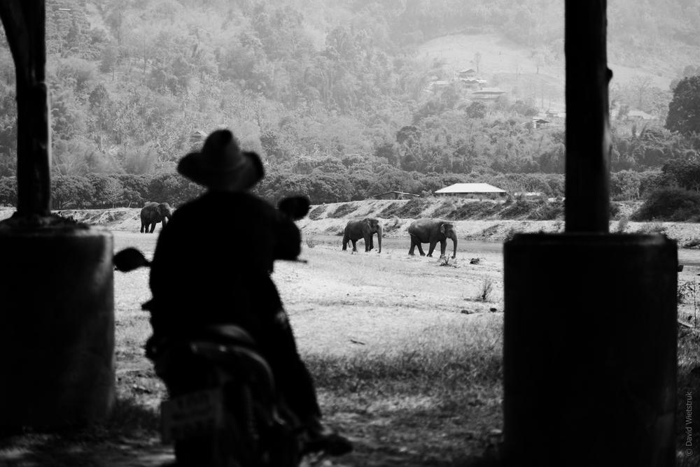 Taken at Elephant Nature Park.