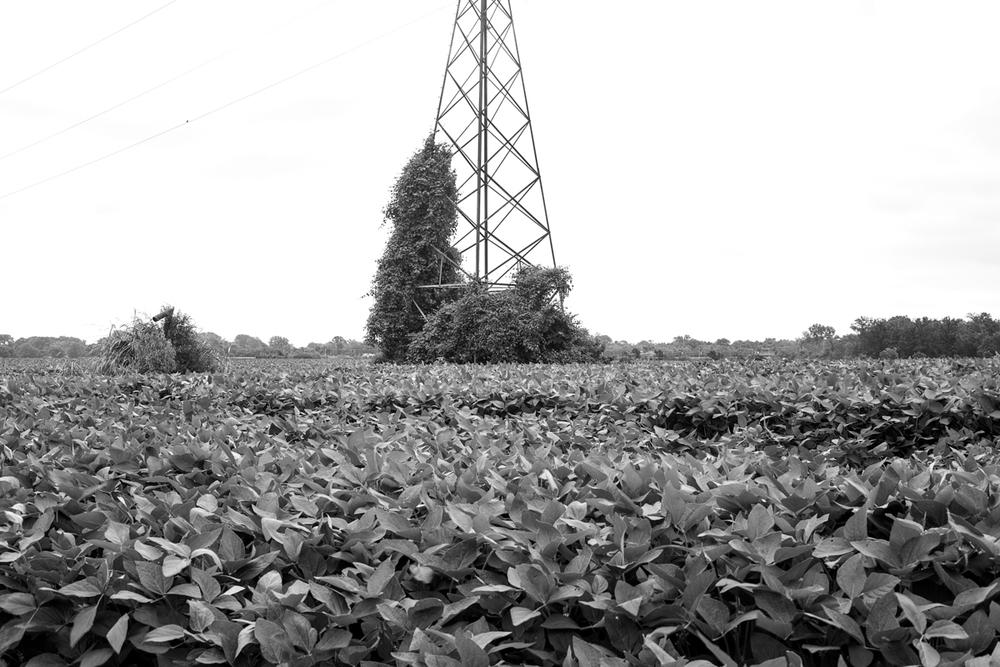 field_bw.jpg