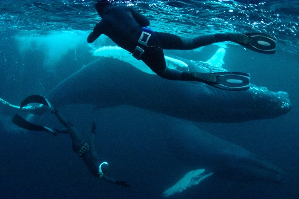 From Tromsö ,  Norway, Kendall says: Swimming with Orca whales in Norway  39 members have recently added their swimming with Orca whales in Norway to Kendall's lifestyle compilation