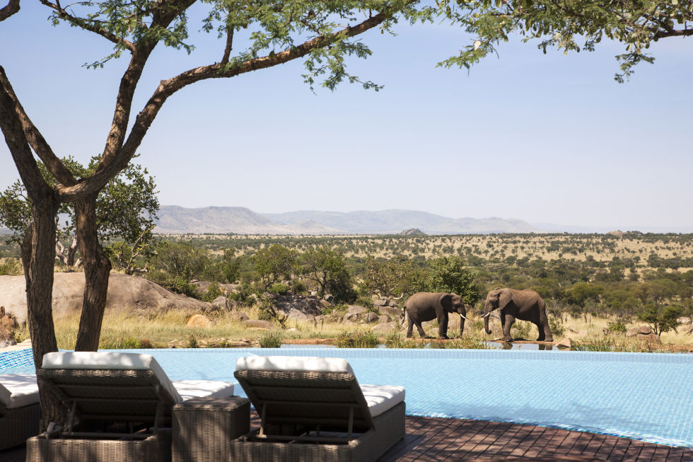 TANZANIA Wake up every morning to a parade of elephants at the watering hole before dip in the pool, a spa or heding out on a game drive across the Plains.