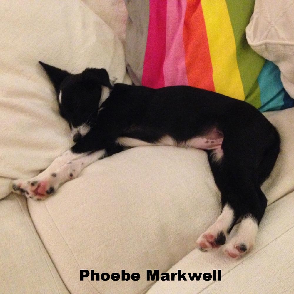 Phoebe Markwell   Phoebe is a dog. She's great.   @PhoebeMarkwell