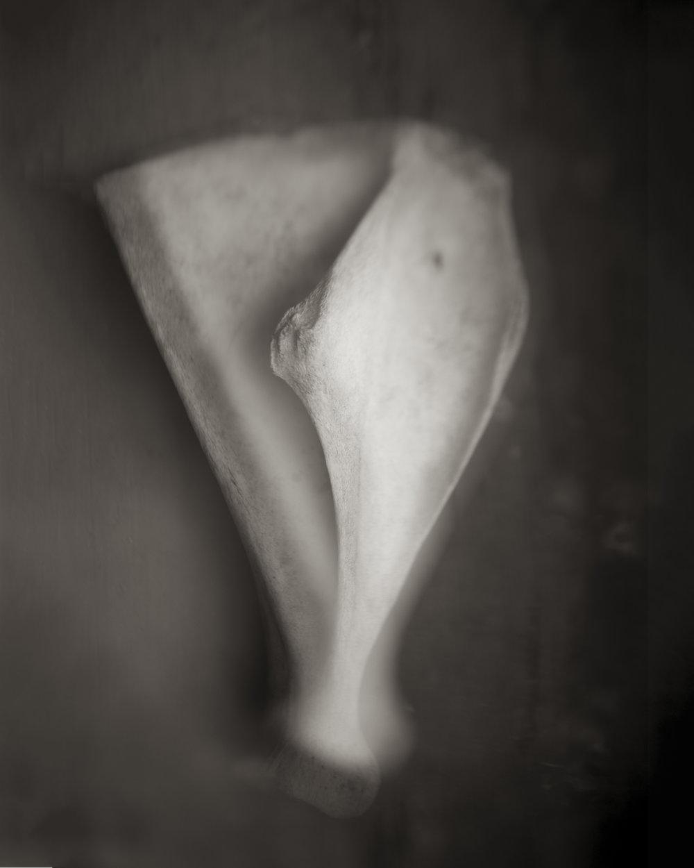 Old Bone.jpg