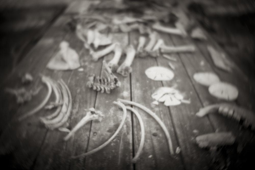 Table of Bones