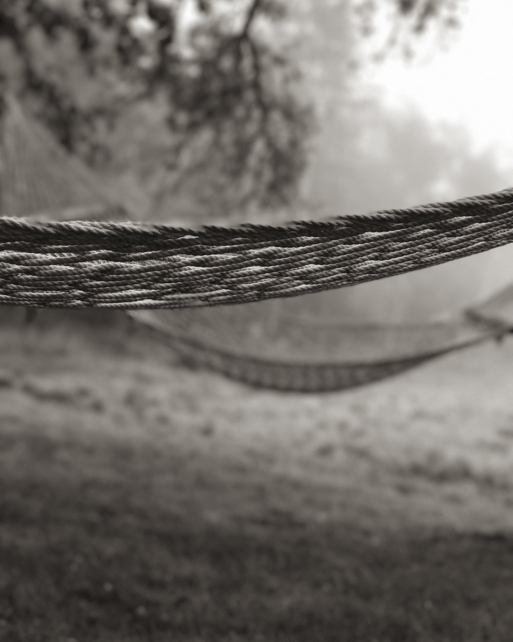 Hammocks in the Mist