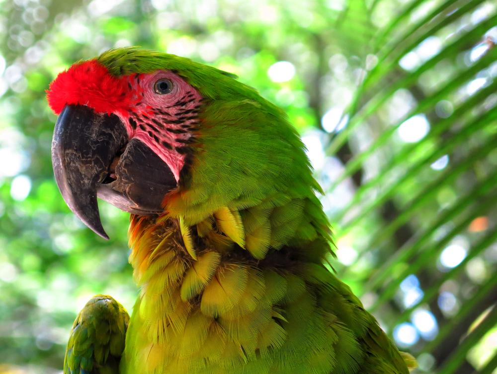 Honduras_Bird park_3_Tonal C.jpg
