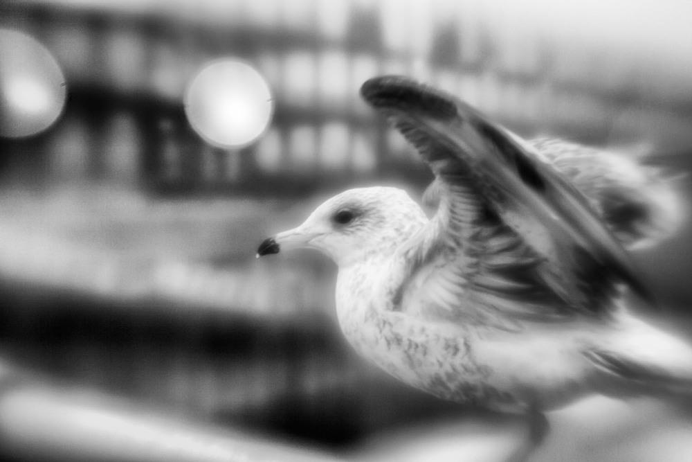 bird_BW.jpg
