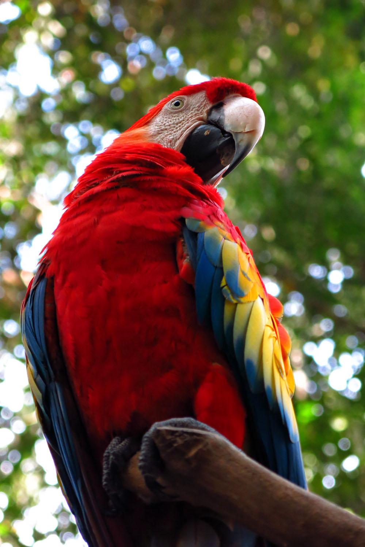 Honduras_Bird park_2_Tonal C_IMG_1458 - Copy.jpg