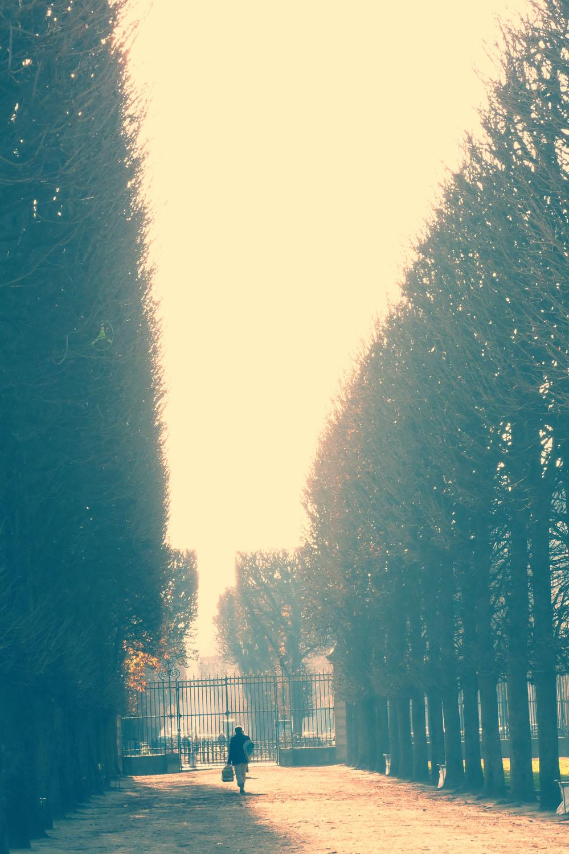jardin lux trees.jpg