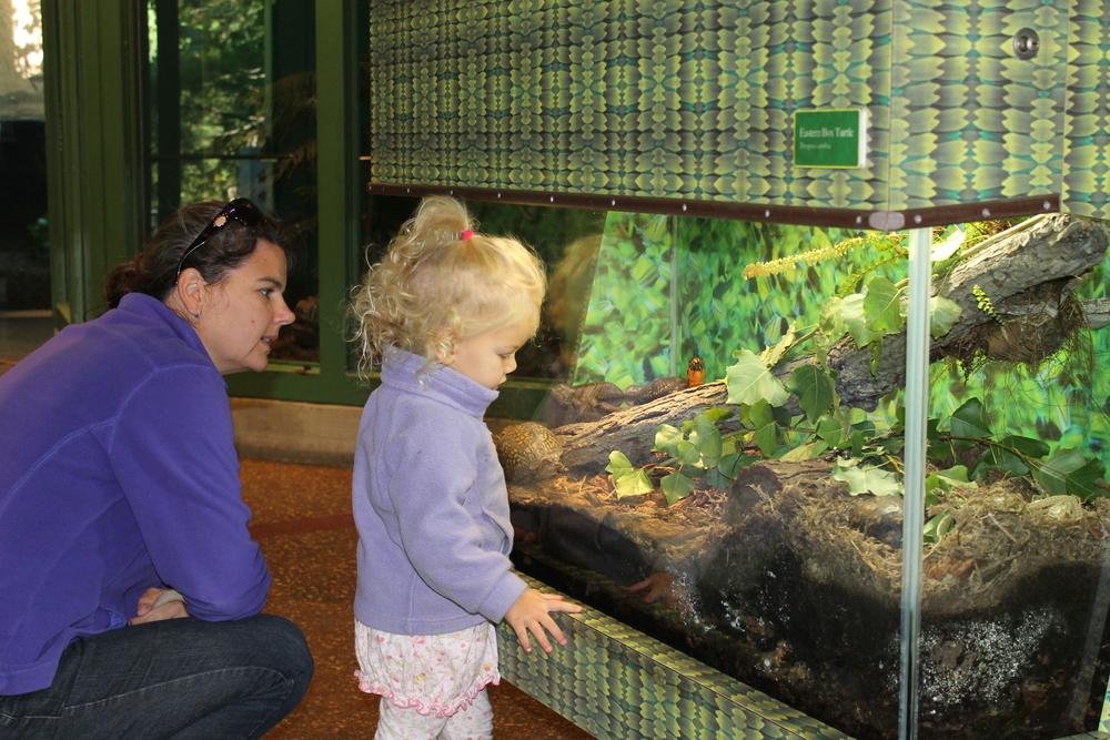 frog exhibit.JPG