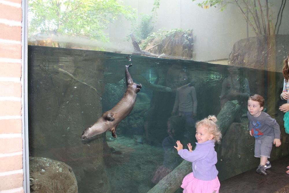 Sept 2012 otter exhibit.jpg