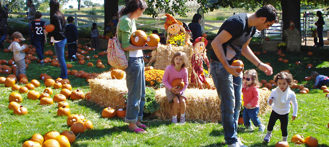 pumpkins_harvestdays.jpeg
